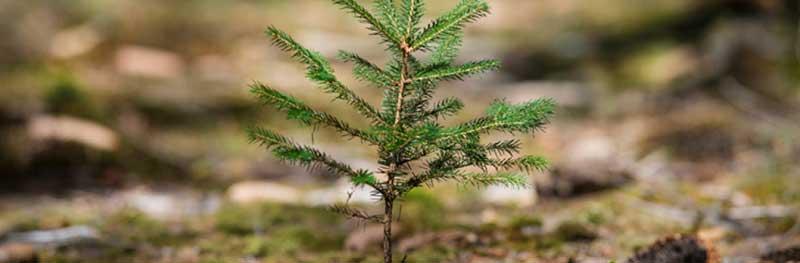 Duurzaamheid-duurzaam-renoveren-3tips