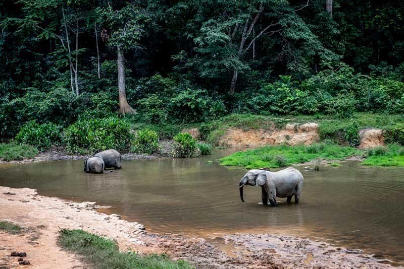olifanten-duurzaam-natuur0fsc